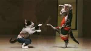Fighting-Kung-Fu-cats